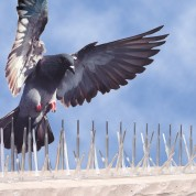 Bird-B-Gone-Pigeon-Spikes